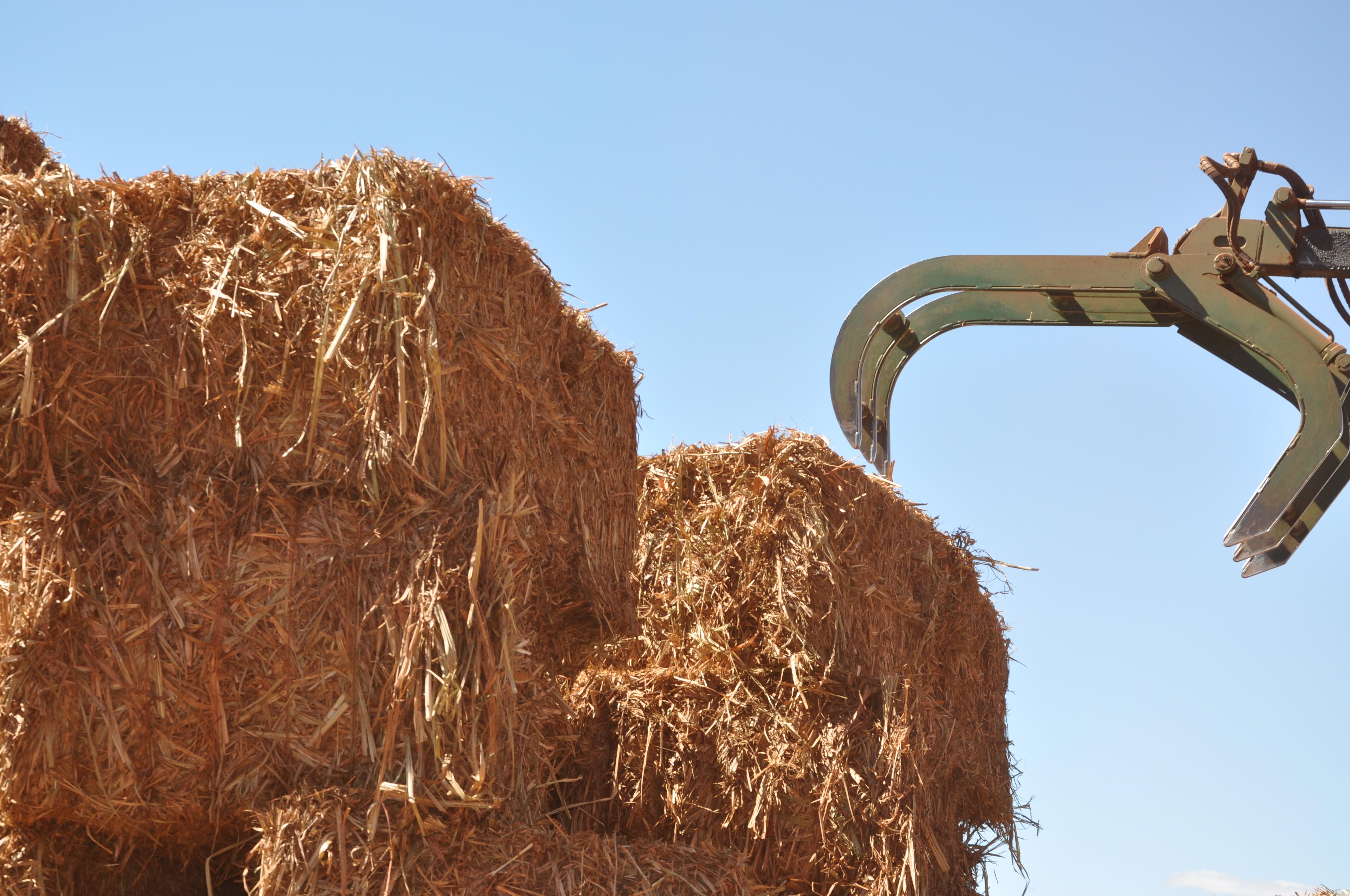 Resultado de imagem para Biomassa da cana representa 62% de toda a cogeração feita no País